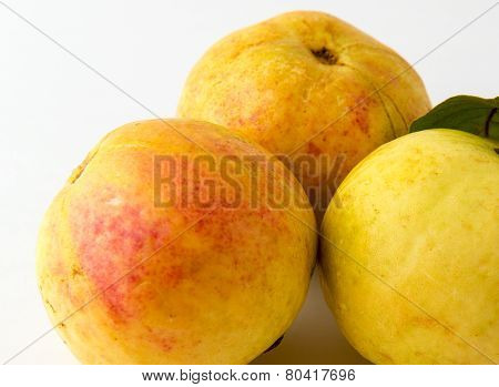 Three guava fruits isolated