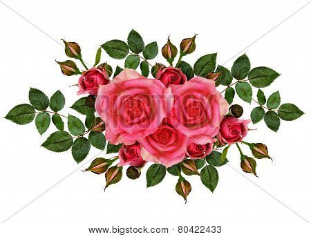 Pink Rose Flowers Composition