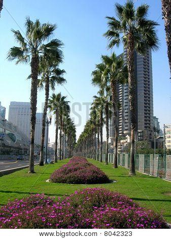 San Diego Greetings