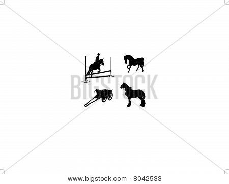 Four Equine Images