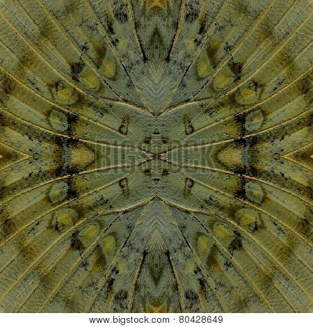 Best Seamless Brownl Background Pattern made of Great Marquis butterfly wing skin texture