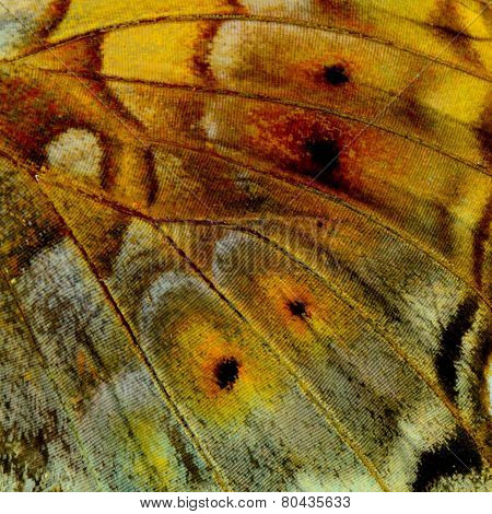 Close up of Vagrant Butterfly's wing skin texture with very sharp in details