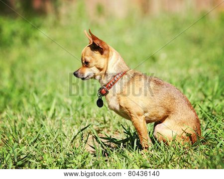 a cute dog at a local public park or a backyard