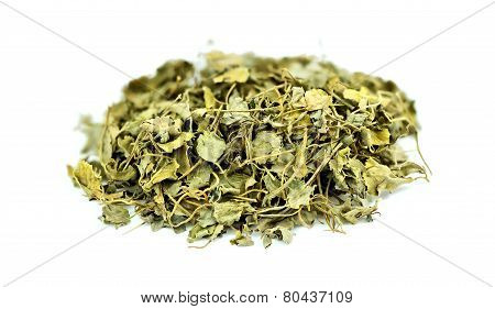 Fenugreek Methi Isolated