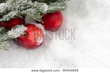 Apples Under A Fir-tree Branch On Snow