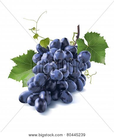 Tiny Dry Blue Grapes Bunch Leaves Isolated On White