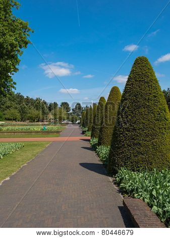 Lane lined with buxus trees