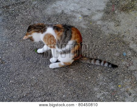A cat with red and grey patches