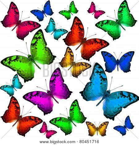 Exotic Of Beautiful Flying Vagrant Butterflies In Colorful Scheme
