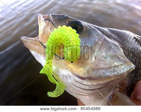 Nice catch fish caught using fishing rod and artificial lure
