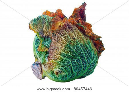 Rotten Cabbage