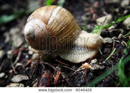 snail on the ground