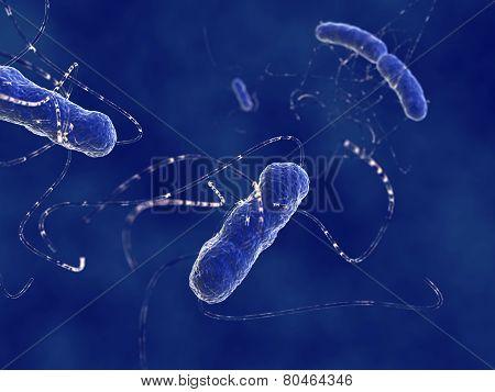 Escherichia coli bacteria