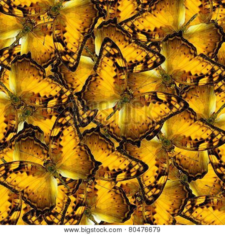 Mix Of Vagrant Butterflies In To A Great Yellow Background Texture