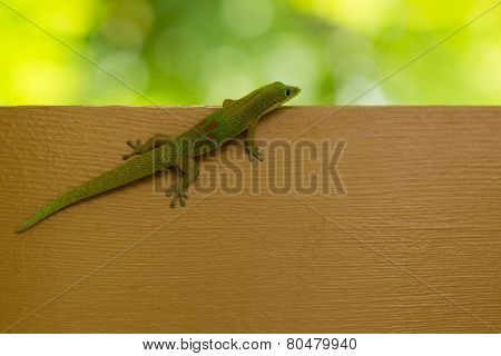 Beautiful Small Green Lizard On Brown Desk