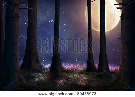 Fantasy Forest At Night