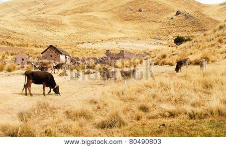 Farm Along The Cusco-puno Road, Peru