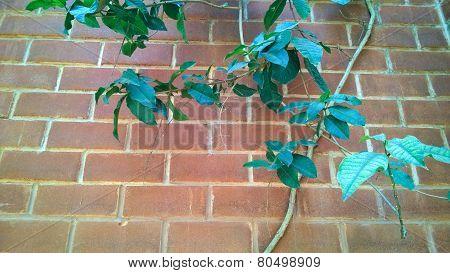 Brick Wall With Tree