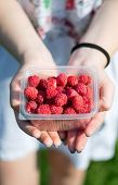 stock photo of picking tray  - in female hands lay a bunch of ripe delicious fresh raspberries - JPG