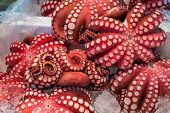 stock photo of octopus  - Red live octopus at Tsukiji fish market Tokyo Japan - JPG