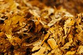 picture of tobacco leaf  - Bulk tobacco background in a factory warehouse - JPG