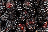 picture of mulberry  - closeup of a mulberries as a background.