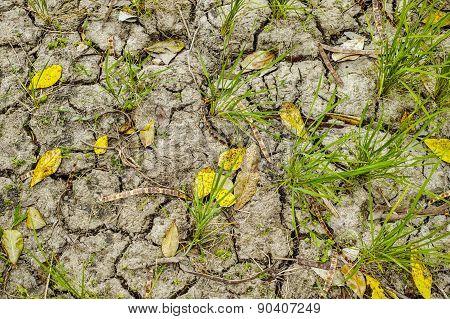 Rice Field Soil Texture