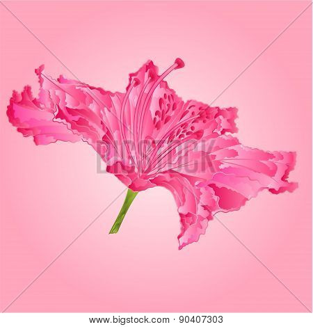 Rhododendron Pink Flower Vector