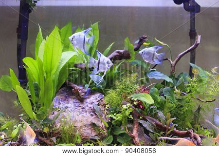 Tank With Aquatic Plants