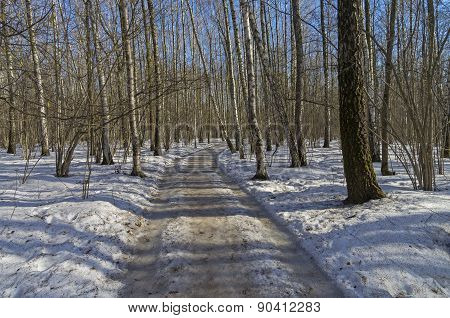 Road In Spring Birch Forest.