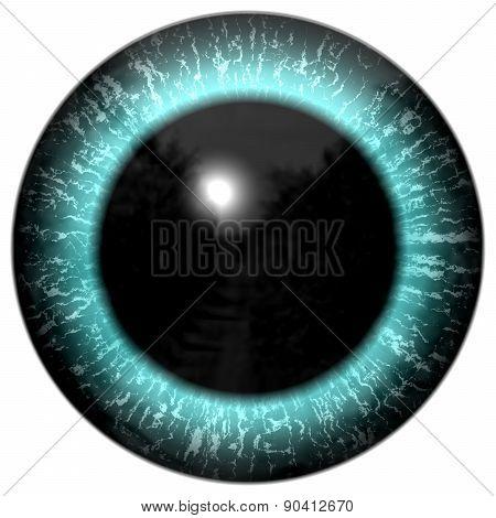 Blue Alien Or Bird Eye Close Up