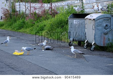 Seagulls And Garbage Containers