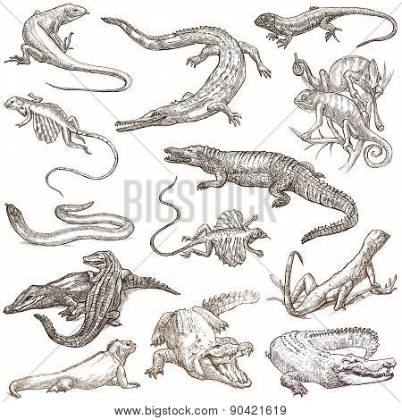 Lizards - An Hand Drawn Pack, Freehands