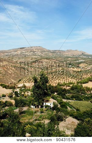 Farmland and olive groves, Andalusia.