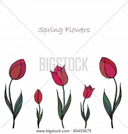 Spring Floral Background With Tulips