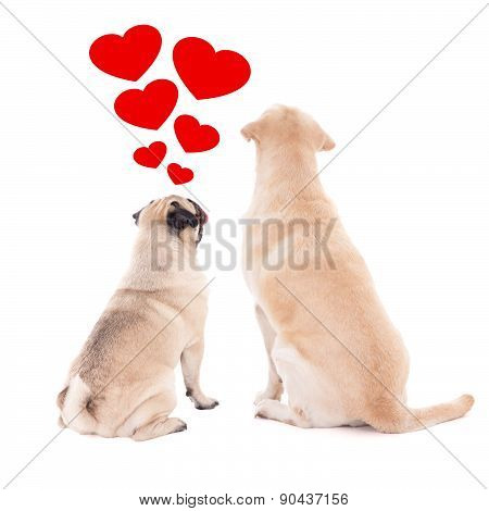 Love Concept - Back View Of Two Sitting Dogs Isolated On White