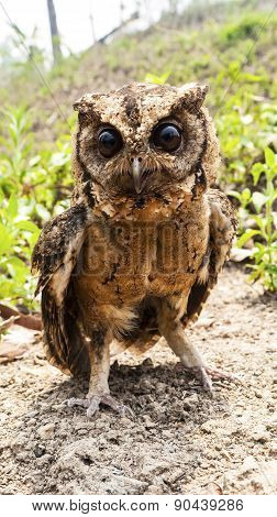 Owl Portrait Front