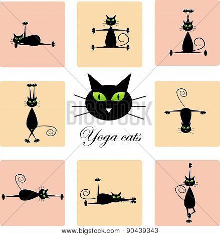 Black cats doing yoga