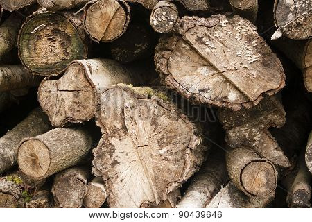 Cross Sections Of Sawn Logs