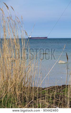 Reed At Sea Coast And Ship Afar
