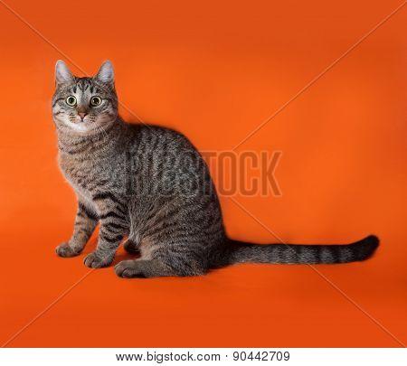Tabby Cat Sitting On Orange
