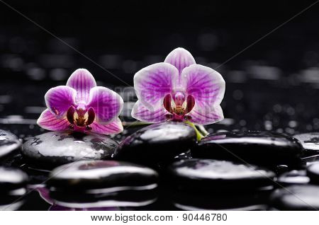 Still life with beautiful two orchid and therapy stones