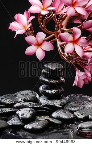 frangipani with stacked black wet stones