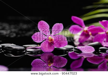 Beautiful pink orchid with green plant and therapy stones