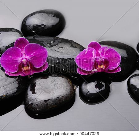 Beautiful red two orchid and therapy stones
