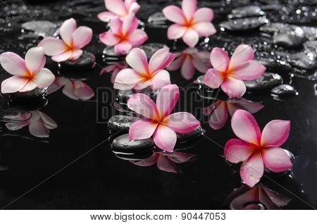 Black stones and frangipani