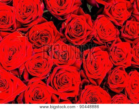 red roses on a flower market. symbol of love.