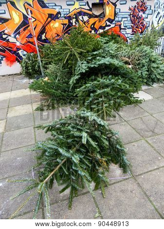 after christmas, the christmas trees are collected for disposal.