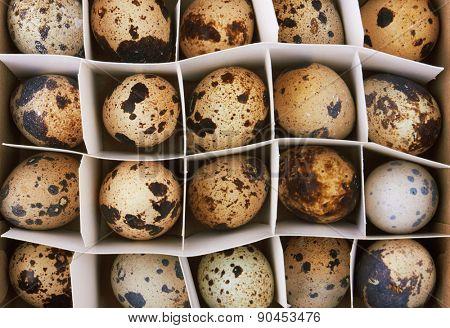 Quail eggs in the box