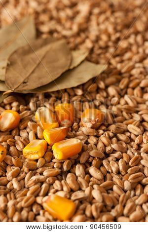 Wheat grains, corn and laurel leaves background